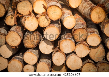 Stacked wood pine timber for construction buildings Background and texture - stock photo