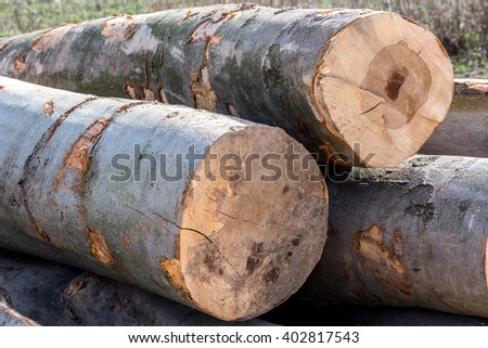Stacked wood pine timber for construction buildings background. Pile of cut trees. decorative wooden circle for texture with copy space. - stock photo