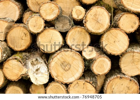 Stacked wooden logs, tree trunks - stock photo