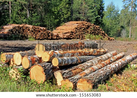 Stacks of logs at a forest logging site on a sunny day. - stock photo