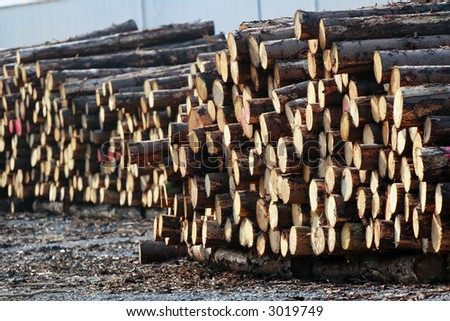 Stacks of Timber - stock photo