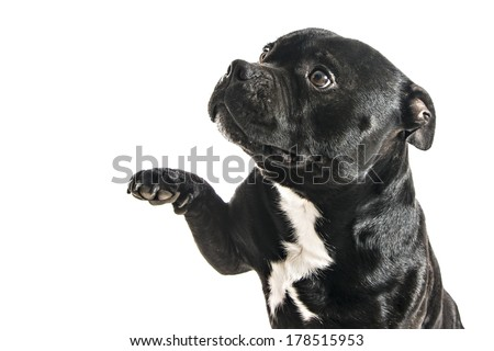 Download English bull terrier Stock Photos, Illustrations, and Vector