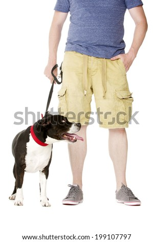 Staffordshire Bull Terrier on lead stood next to owner - stock photo