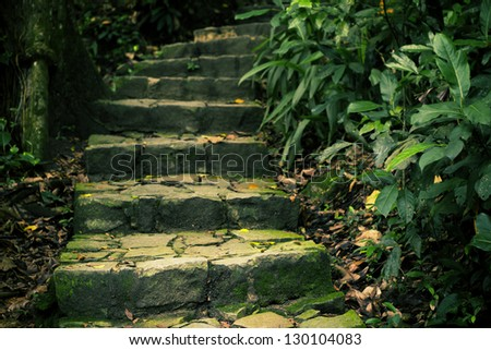 Staircase in the forest - stock photo