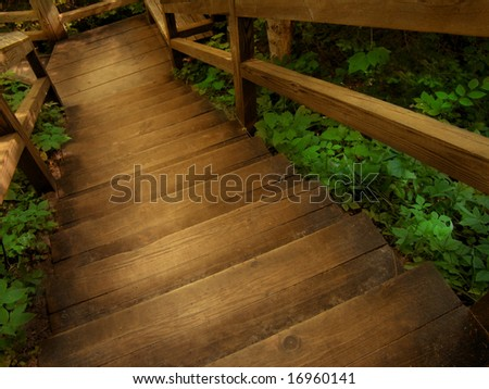 stairs leading down through a lush forest. - stock photo
