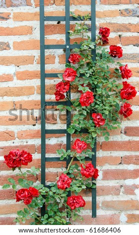 Stairs with rose bushes - stock photo