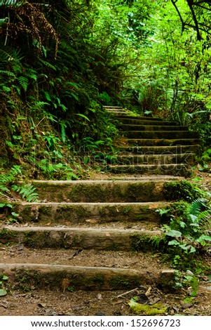Stairway leading up into the green forest - stock photo