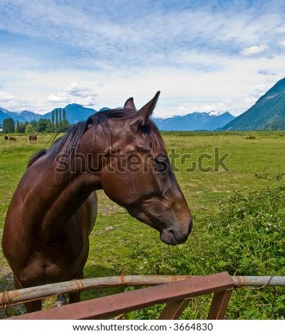 Stallion at local ranch - stock photo