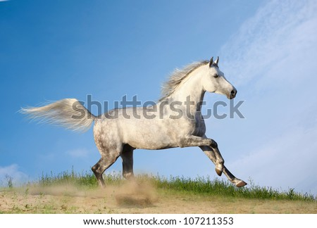 stallion in dust - stock photo
