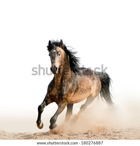 Stallion on a white  - stock photo