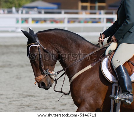 stallion ready to compete in dressage competition - stock photo