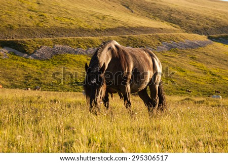 Stallion walking in the prairie in the sunset light - stock photo