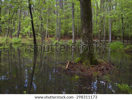 Stand of tall trees that has a lot of water below
