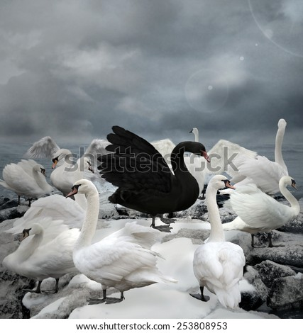 Stand out of the crowd - The black swan - stock photo