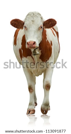 Standing cow isolated on white - stock photo