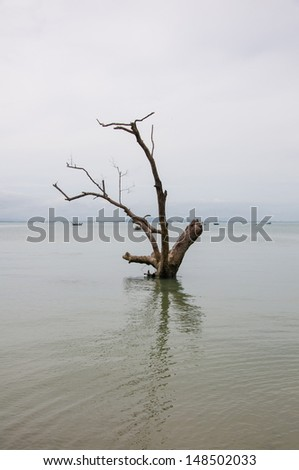 Standing dead trees that died in sea. - stock photo
