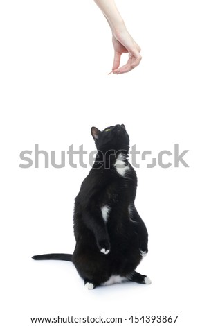 Standing on the floor black cat isolated over the white background - stock photo