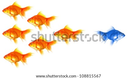 standing out of the crowd concept with individual successful goldfish - stock photo