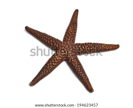 star fish on white background  - stock photo
