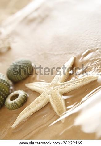 Starfish and echinus on the Beach - stock photo