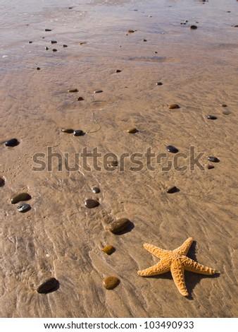 Starfish and Rocks on the Beach - stock photo