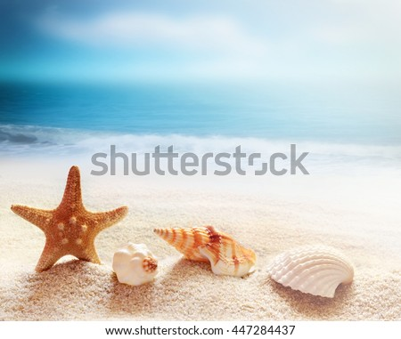 Starfish and sea shells on the beach and ocean as  background. Summer beach. Seashells. - stock photo