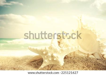 Starfish and seashell on the sandy beach - stock photo