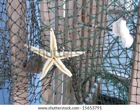 Starfish and shell on fishing net. - stock photo