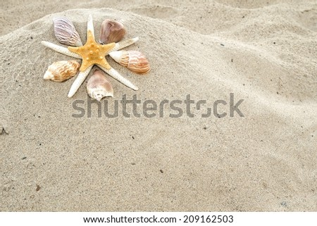 Starfish and shells on a sandy beach with copy space.   - stock photo