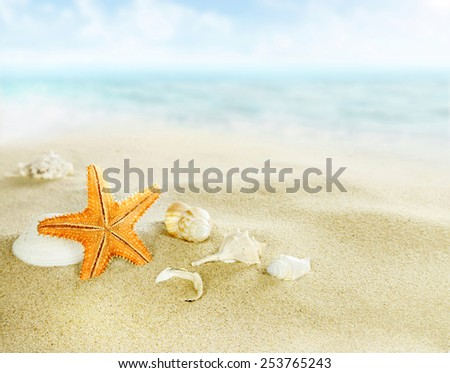 Starfish and shells on sandy beach - stock photo