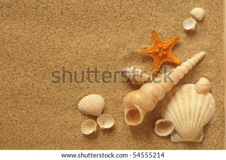 starfish and shells on the beach, vacation memories - stock photo