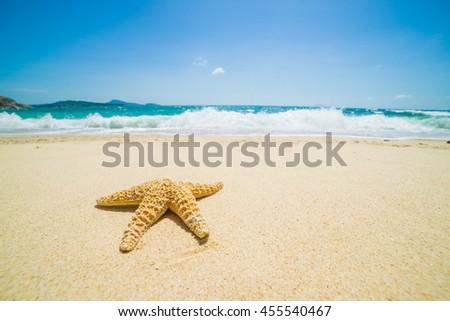 Starfish at the tropical beach  - stock photo