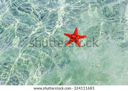 Starfish in pure fresh water/Red starfish - stock photo