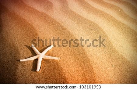 starfish in the beach sand - stock photo