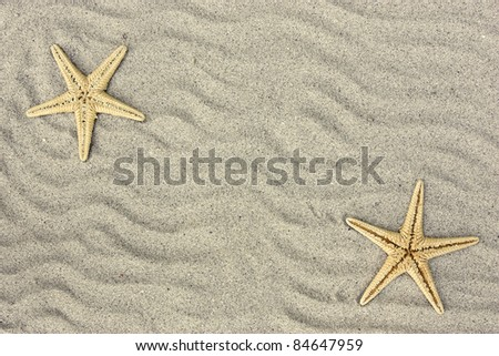 starfish in the beach sand - stock photo