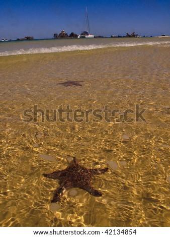 Starfish in the water on Moreton Island beach - stock photo