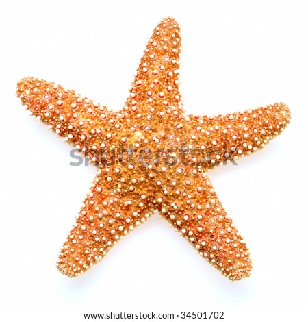 starfish isolated on white background - stock photo