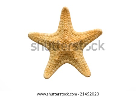 Starfish isolated on white background with contours - stock photo