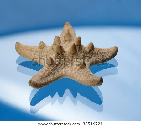Starfish on a blue background - stock photo