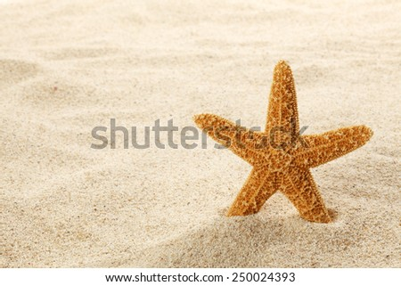 Starfish on Beach Sand - stock photo