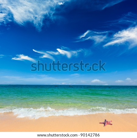Starfish on gorgeous summer beach and blue sky - stock photo