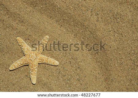 starfish on sand, room for your text - stock photo