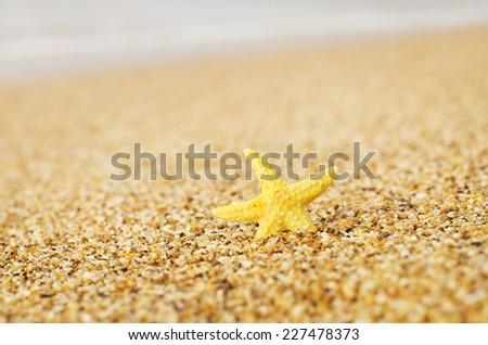 Starfish on sandy beach. Nature composition. - stock photo