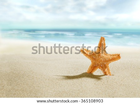 Starfish on sunny beach - stock photo