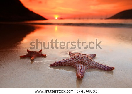 Starfish on the beach and beautiful sunset over the sea background - stock photo