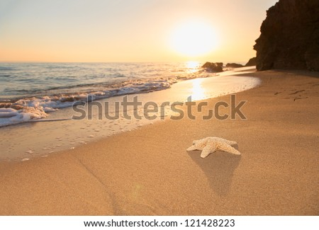 Starfish on the beach at sunrise - stock photo