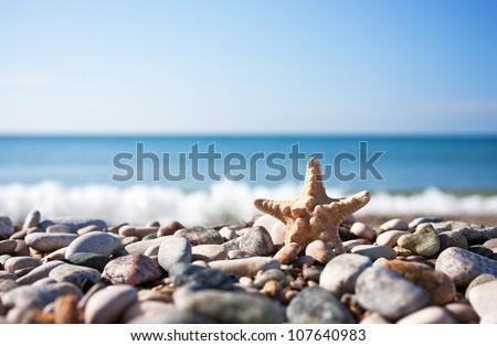 Starfish on the beach background - stock photo