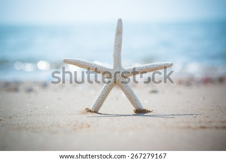 Starfish on the Beach for background - stock photo