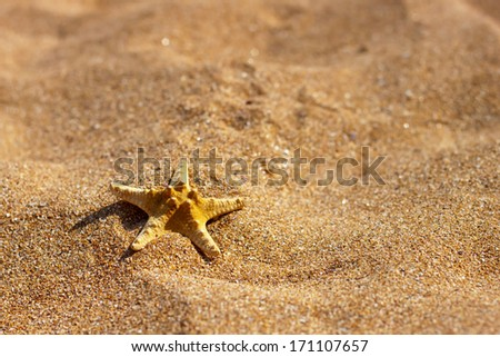 starfish on the beach sand in the summertime - stock photo