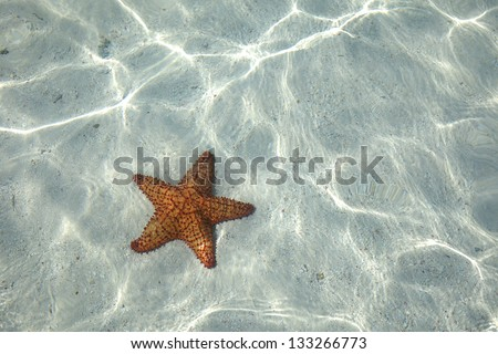 Starfish on the bottom of the Caribbean Sea - stock photo
